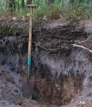 Soil Profile Podzol