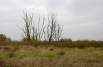 abgestorbene Bäume im NSG Trebeltal