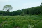 geneigte Moorfläche