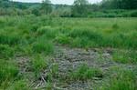 gemulchte Weide