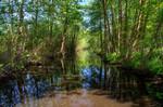 Erlenbruchwald am Töpchiner Hauptgraben