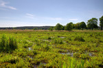 von Wasserbüffel beweidete heterogene Moorfläche