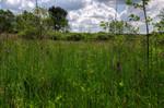 Niedermoor mit Knabenkraut Dactylorhiza