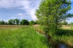 Niedermoor mit direktem Kontakt zum Gewässer und flurnahem Grundwasser
