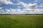 entwässertes Niedermoor mit Grünland
