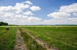 Grünlandwirtschaft in der Randow Welse