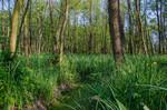 Graben im aufgeforsteten Erlenbruchwald