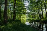 Erlenbruchwald am Nordfließ
