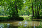 Niedermoor mit direkten Kontakt zum Gewässer