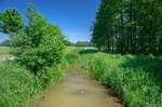 verkrauteter Entwässerungsgraben