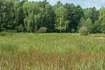 Renaturierung der Michenwiesen