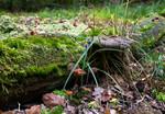 Moor im Grumsinder Forst