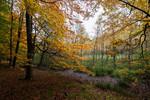 Waldmoor (Grumsiner Forst)