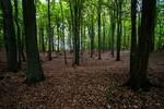 naturnaher Buchenwald (Grumsiner Frost)