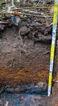 Auenboden mit Grundwassereinfluß aus abgelagerten Mudden