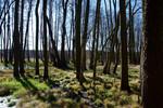 Auenbruchwald an der Spree