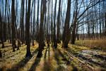 Erlenbruchwald bei Hangelsberg