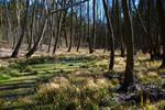 Randsumpf an einem Auenbruchwald