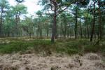 Kiefern und Birken über dem Bullenmoor