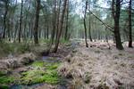 Verlandeter Entwässerungsgraben mit Schwingdecke