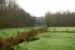 Weide im Metzmoor