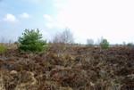 Verheidung einer Hochmoorfläche durch Entwässerung