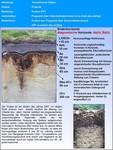 Bodensteckbriefe: Podsol