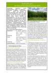 Steckbrief für Niedermoorbewirtschaftung bei unterschiedlichen Wasserverhältnissen: Nr. 03 - Weide (Salix spec.) im Anbau als Kurzumtriebsplantage