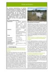 Steckbrief für Niedermoorbewirtschaftung bei unterschiedlichen Wasserverhältnissen: Nr. 05 - Extensiv genutzte Feuchtweiden