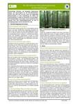 Steckbrief für Niedermoorbewirtschaftung bei unterschiedlichen Wasserverhältnissen: Nr. 08 - Schwarz-Erle (Alnus glutinosa) als Wertholzbaum