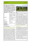 Steckbrief für Niedermoorbewirtschaftung bei unterschiedlichen Wasserverhältnissen: Nr. 10 - Nassweide mit Wasserbüffeln (Bubalus arnee)