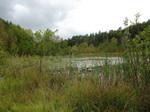 naturnahes Niedermoor mit Schwingrasen (Heilsee)