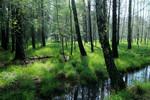 Waldmoor mit altem Entwässerungsgraben