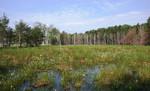 offene Landschaft mit Wollgräsern und kleinräumiger freier Wasserfläche