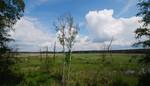 """Panorama auf die offene Landschaft in NSG """"Der Loben"""" vom Aussichtsturm aus"""