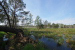 offene Landschaft mit Wollgräsern und abgestorbenen Bäumen