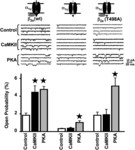 L-Type Ca2+ Channel Facilitation Mediated by Phosphorylation of the β Subunit by CaMKII