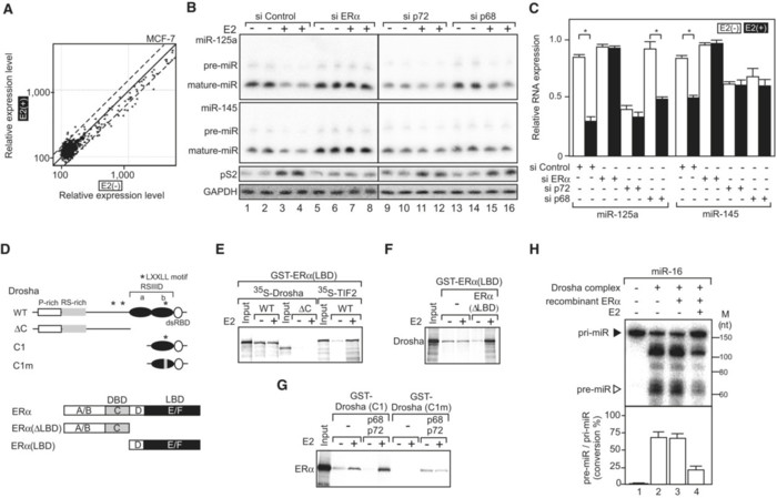 Maturation of MicroRNA Is Hormonally Regulated by a Nuclear Receptor