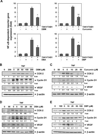 Suppression of pro-inflammatory and proliferative pathways by diferuloylmethane (curcumin) and its analogues dibenzoylmethane, dibenzoylpropane, and dibenzylideneacetone: Role of Michael acceptors and