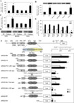 Methylglyoxal Modification of mSin3A Links Glycolysis to Angiopoietin-2 Transcription