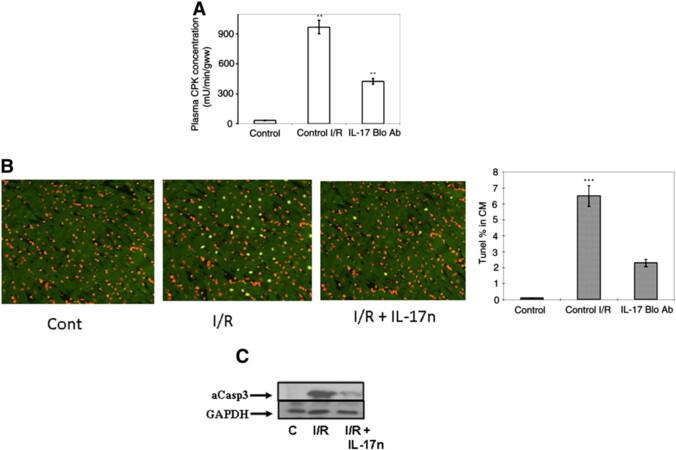 Enhanced IL-17 signalling following myocardial ischaemia/reperfusion injury