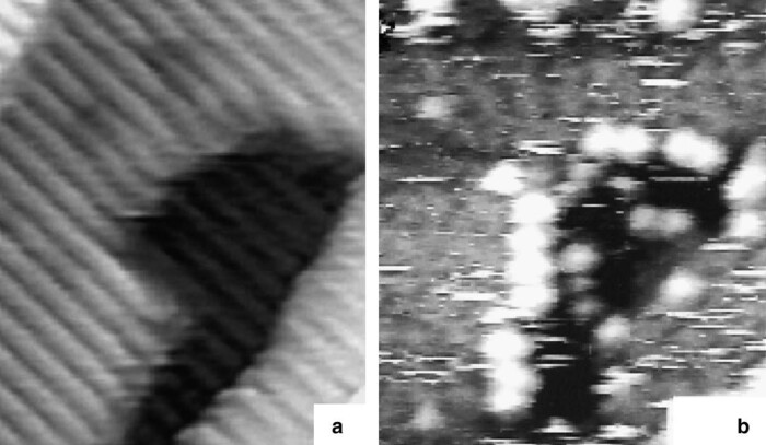 Surface enhanced Raman scattering at single crystal TiO2