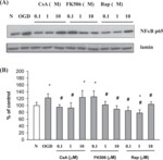 Immunosuppressant cytoprotection correlates with HMGB1 suppression in primary astrocyte cultures exposed to combined oxygen-glucose deprivation