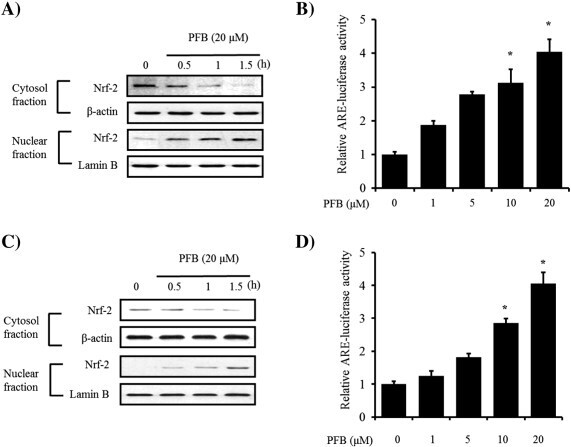 Pierisformoside B exhibits neuroprotective and anti-inflammatory effects in murine hippocampal and microglial cells via the HO-1/Nrf2-mediated pathway