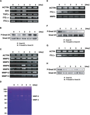 Induction of a Homeostatic Circuit in Lung Tissue by Microbial Compounds