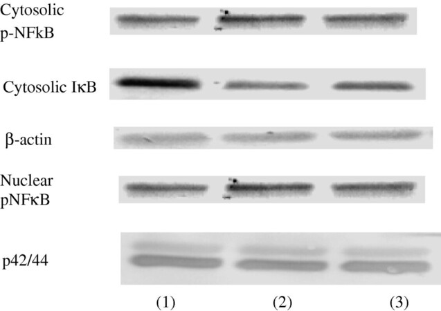 Effects of ethanol on monosodium urate crystal-induced inflammation