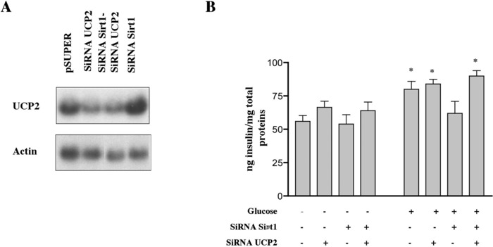 Sirt1 Regulates Insulin Secretion by Repressing UCP2 in Pancreatic β Cells