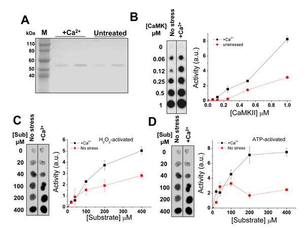 Methionine Mistranslation Bypasses the Restraint of the Genetic Code to Generate Mutant Proteins with Distinct Activities