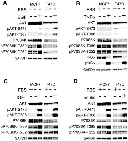 Targeting 3-Phosphoinoside-Dependent Kinase-1 to Inhibit Insulin-Like Growth Factor-I Induced AKT and p70 S6 Kinase Activation in Breast Cancer Cells