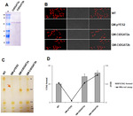 Functional Characterization of Two Structurally Novel Diacylglycerol Acyltransferase2 Isozymes Responsible for the Enhanced Production of Stearate-Rich Storage Lipid in Candida tropicalis SY005